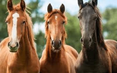 Moet (paarden) coach een beschermt beroep worden?