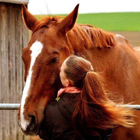 Coaching met eigen paard - Brabant - Tilburg