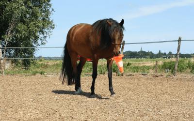 De 3 belangrijkste tips wanneer je een paardencoach zoekt