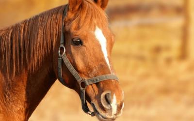 Dit is waarom je gelukkig wordt van paarden