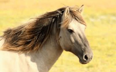 Onderzoek wijst uit dat paarden op diep niveau onze emoties begrijpen en herinneren.